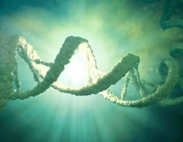 Scientists launch proposal to create synthetic human genome